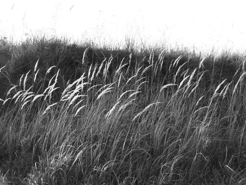 Малые Соли, придорожная трава