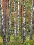 флора-3* Лесные сказки