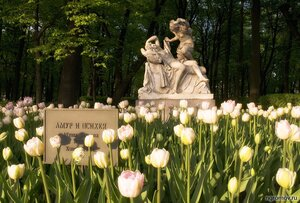 Амур и Психея (Амур, Летний сад, Петербург, психея, скульптура, тюльпан, цветок)