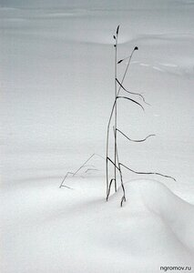 Двое на ветру  (зима, лист, монохром, снег)