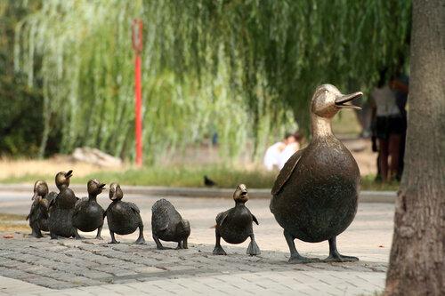 Утиное семейство