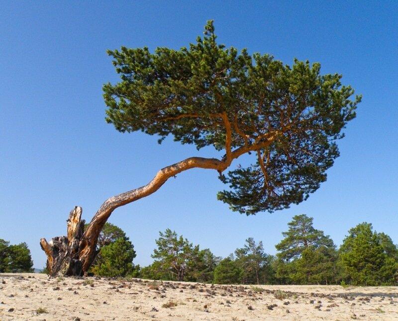 девушка дерево на байкале картинки интимных стрижек существует