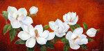 Magnolia-Melody.jpg
