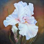 White-Iris-II.jpg
