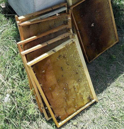 Пчёлы 04