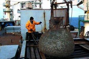 Где же рыба? — второй десяток лет этим вопросом озабочены должностные лица «вертикали власти» Дальнего Востока
