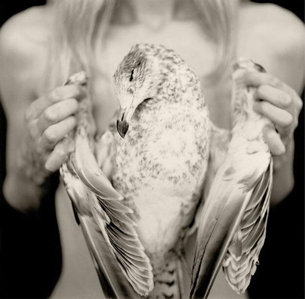"""фотограф Erik Slayton """"Ornithological Study"""""""