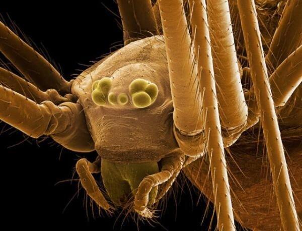 Перед вами фотографии крошечных насекомых, сделанных под микроскопом.