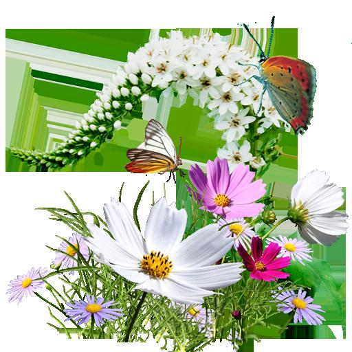 http://img-fotki.yandex.ru/get/5404/102699435.750/0_8f388_5f8a41ac_orig.png