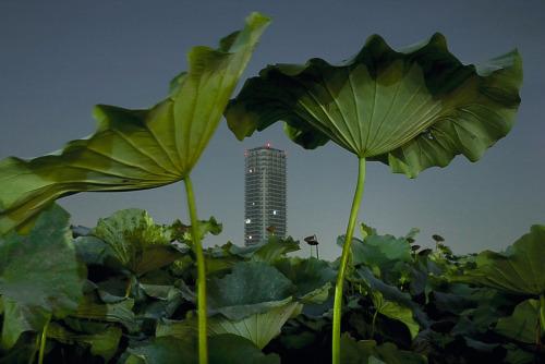 Adrift in Tokyo, Marie-Sophie Leturcq.jpg