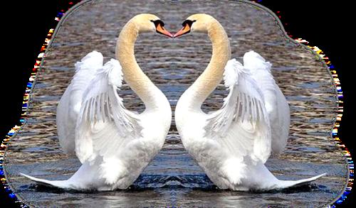 Картинка лебединая верность на прозрачном фоне