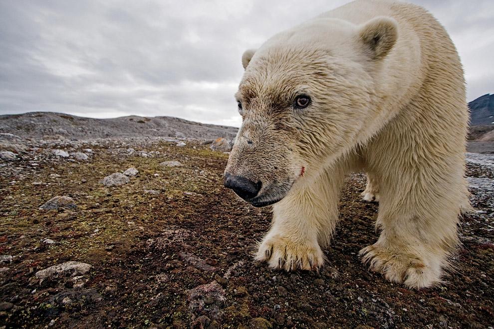 17. Медведь в сосульках.