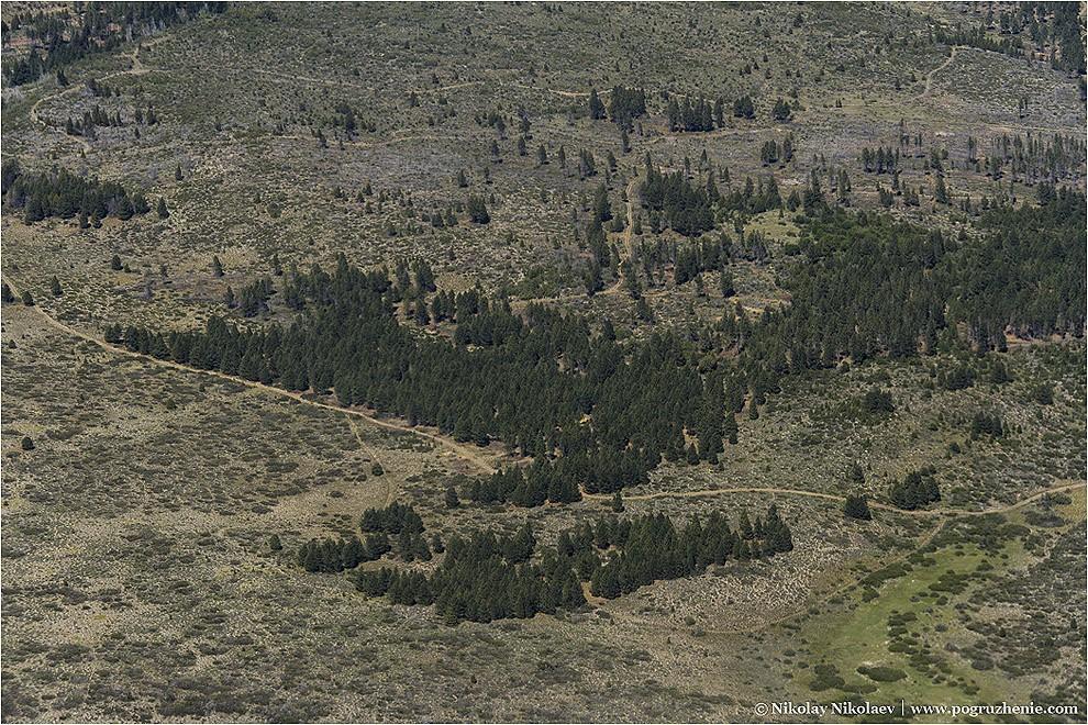 10. Редкие деревья, которые можно встретить в пустынной провинции Мендоса