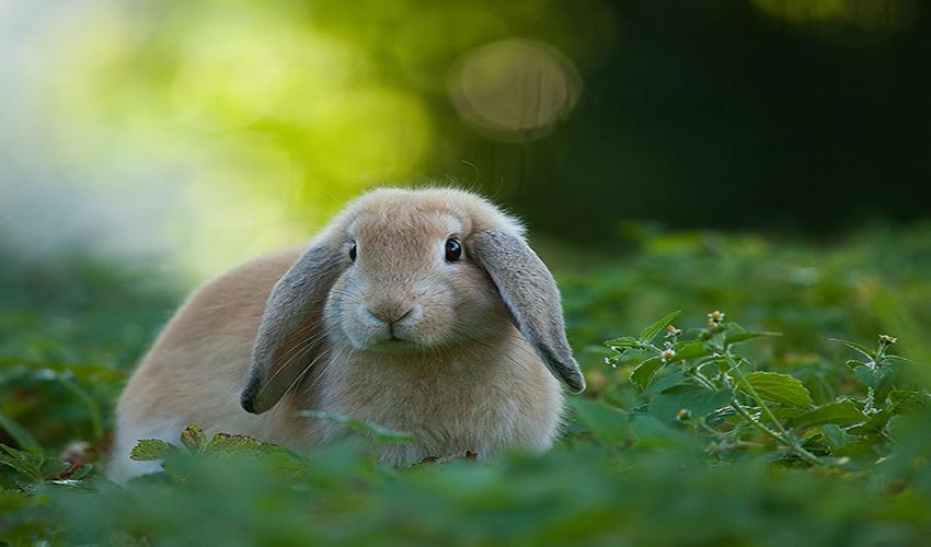 Картинка зайца который боится