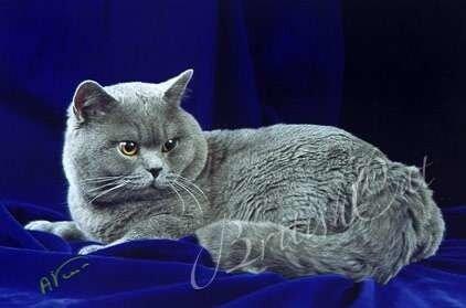 Знаменитый британец - кот по имени Сундук