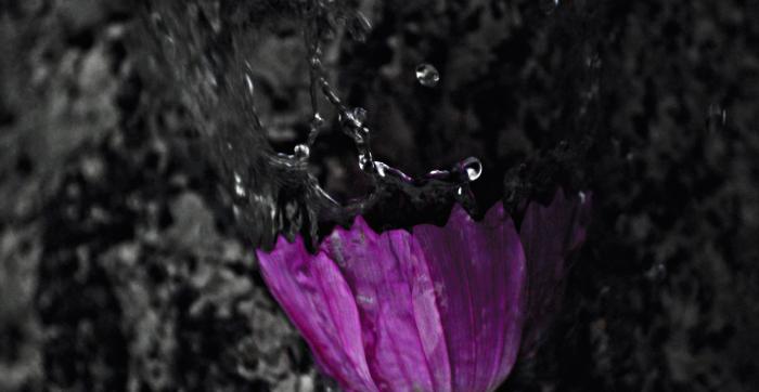 цветок фиолетовый колокольчик