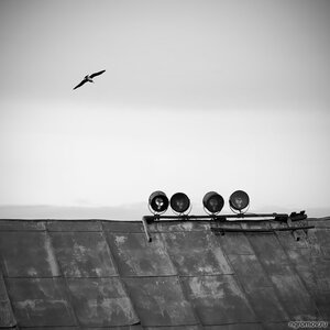 В небе (монохром, птица, чайка)