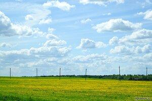 Голубой, желтый, зеленый (поле, столб, цветок)