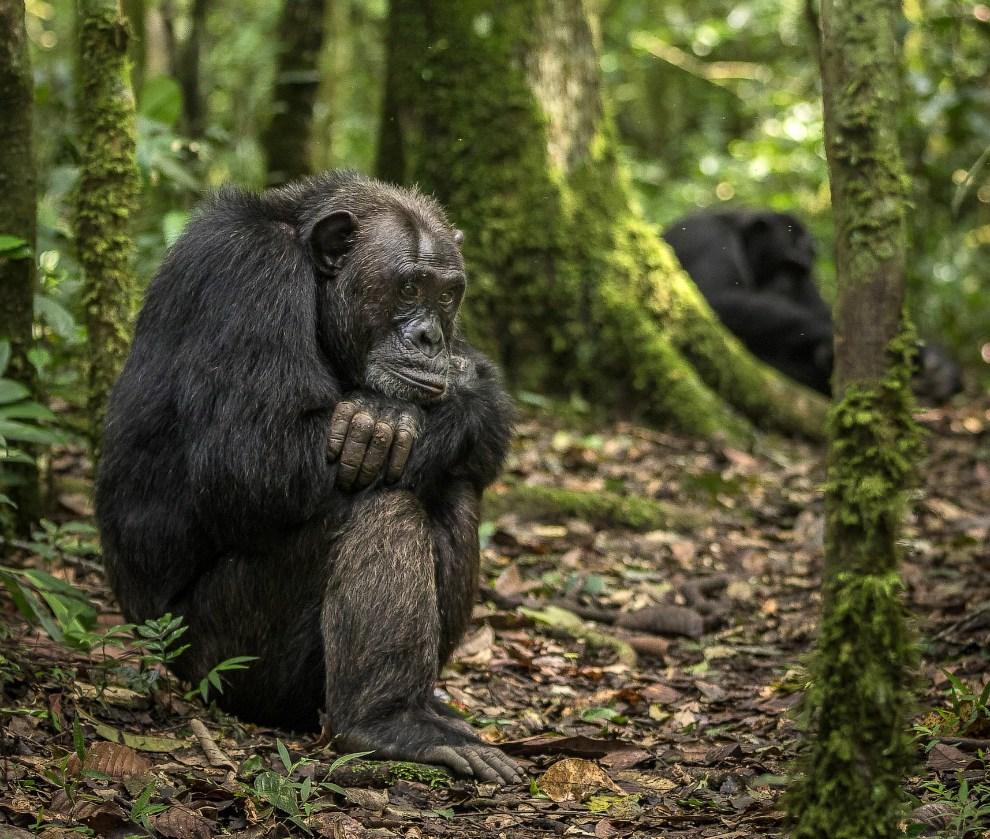 Животные Африки на снимках лучшего фотографа года