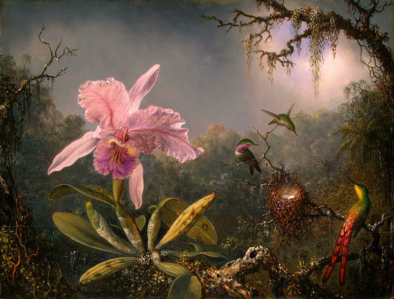 Martin Johnson Heade (4).jpg