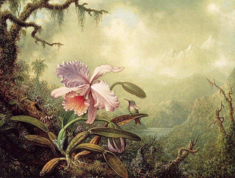 Martin Johnson Heade (12).jpg