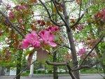 Ботанический сад МГУ и Поклонная