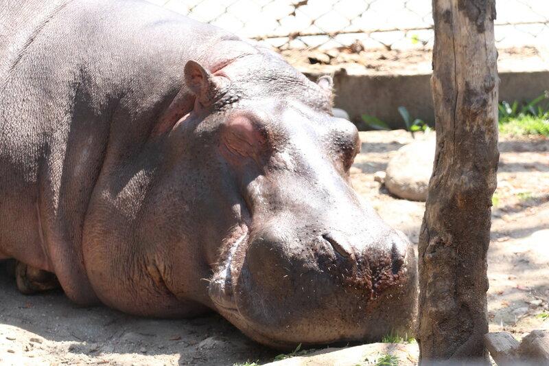 3оопарк в Катманду