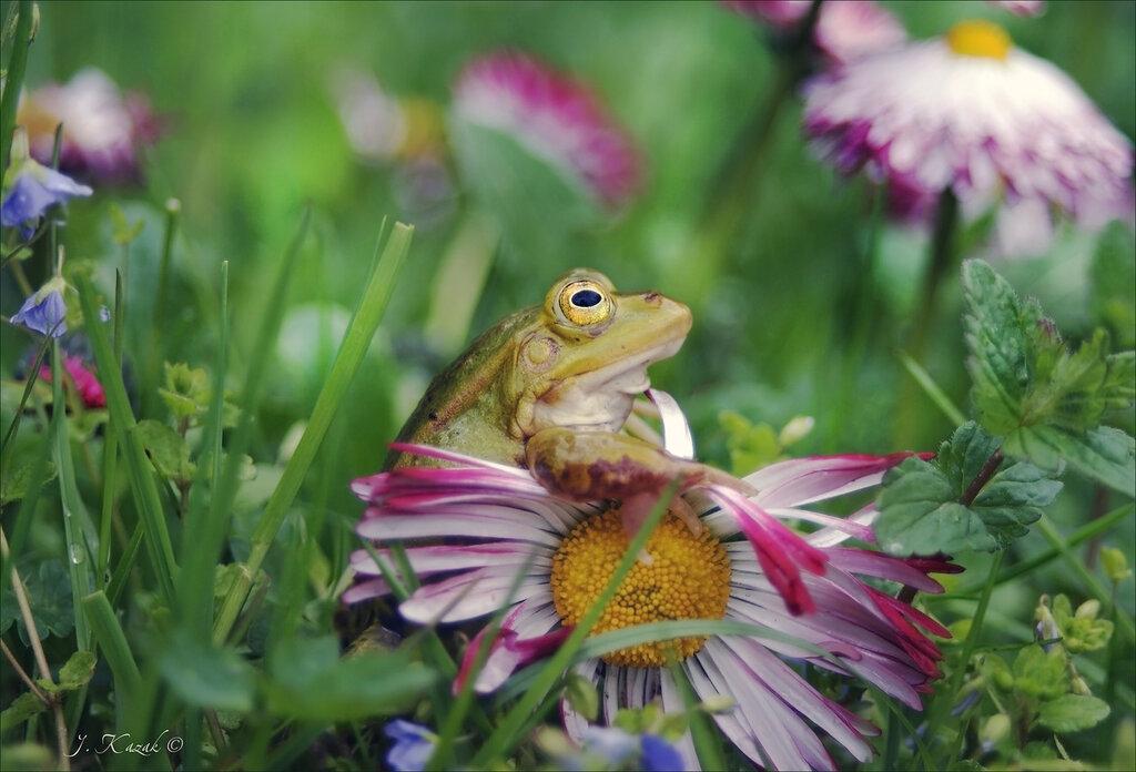 Лягушка в цветах.
