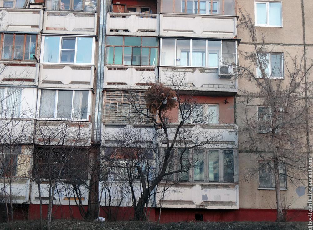 4 взрослая поликлиника ростов на дону днепровский