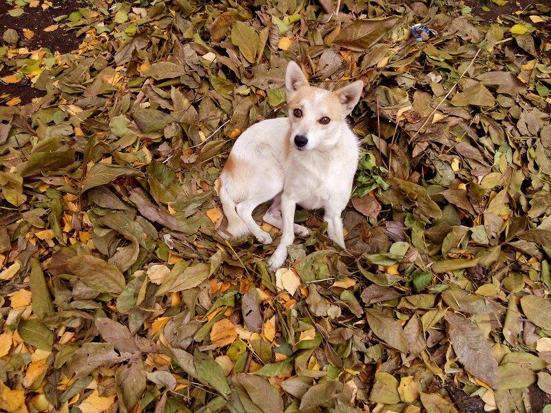 Артефакты осени-собака.jpg
