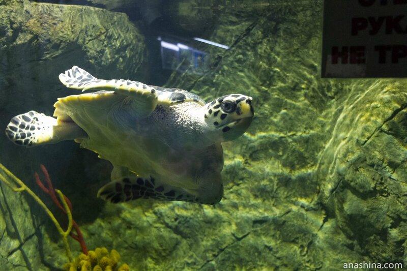 Черепаха, Океанариум в парке Ривьера, Сочи