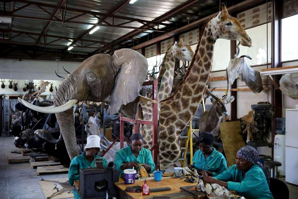 Охотничий саафари туризм в Африке как промышленная индустрия (1)