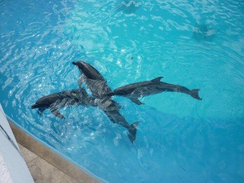 Оргазм дельфинов