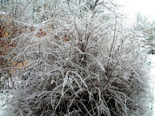 Ледовый куст*