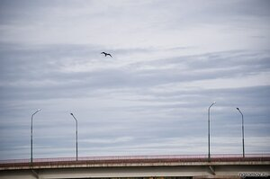 Холодный пейзаж (мост, птица, фонарь, чайка)