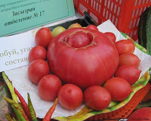 Сорт помидор с новым годом