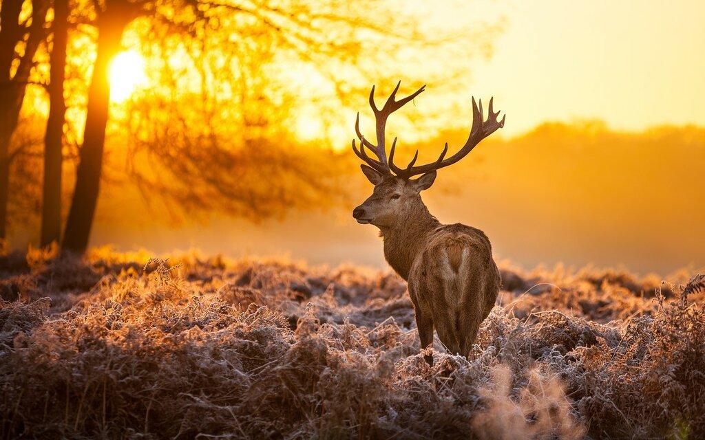 deer-2880x1800.jpg