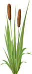 NLD Plant (3).png