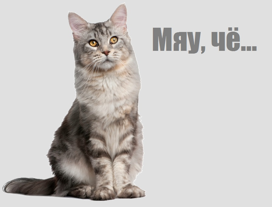 cat-sitting.jpg