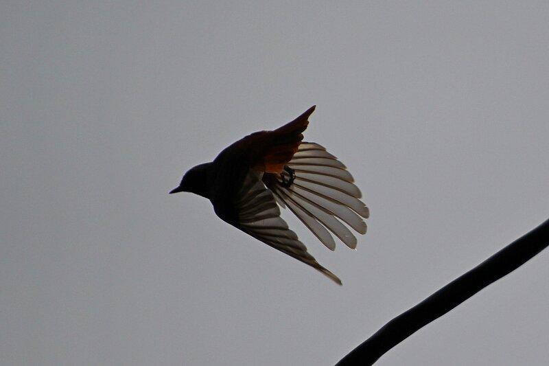 Прозрачные пёрышки крыльев