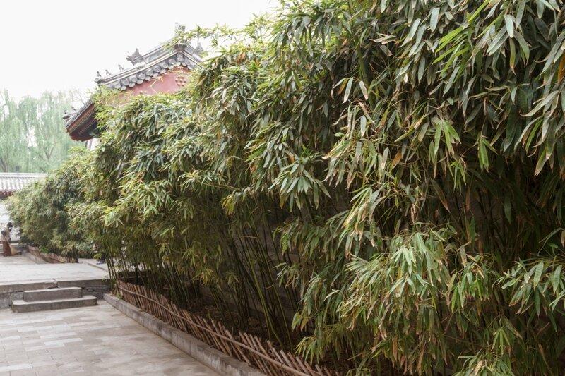 Бамбук около стены