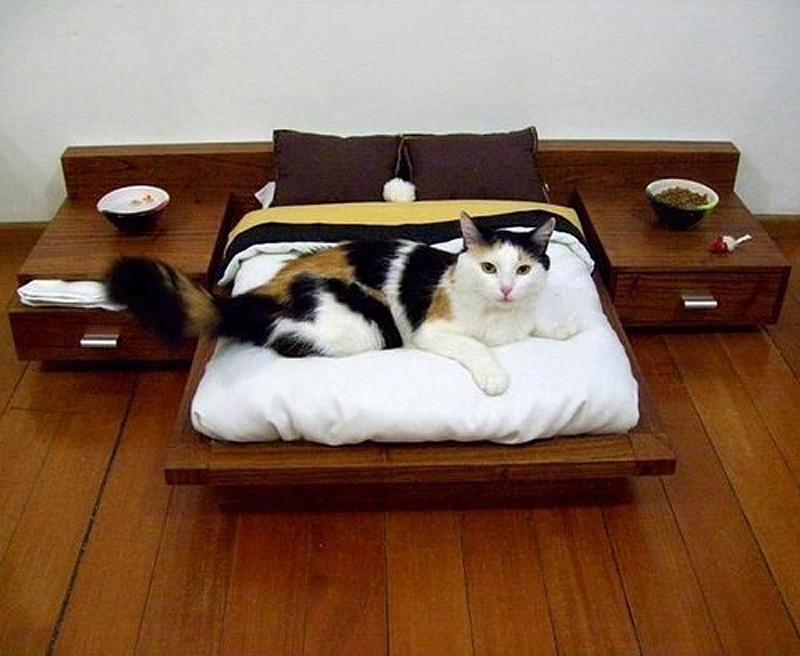Котики и кошечки 0_7c008_e21c07b0_orig