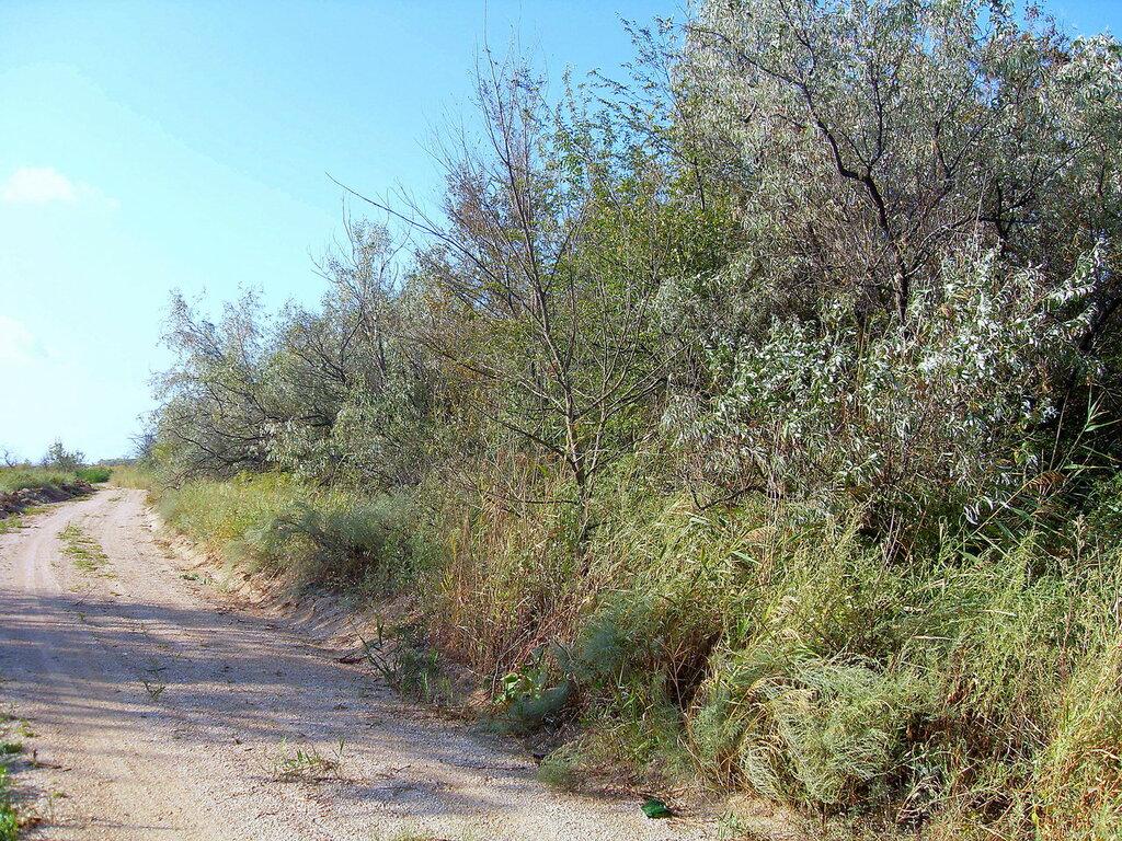 Дорога у леса ... SDC14770.JPG