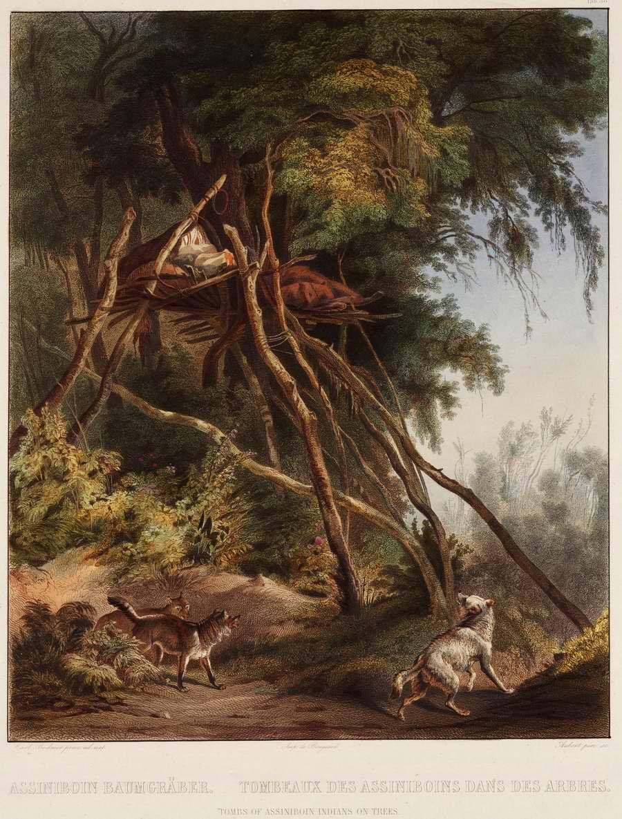 Гробница умершего индейца из племени ассинибойнов на ветвях деревьев - Karl Bodmer