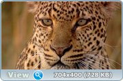 ������ ����� �������� / PBS: Nature - Revealing the Leopard (2010) HDRip + BDRip