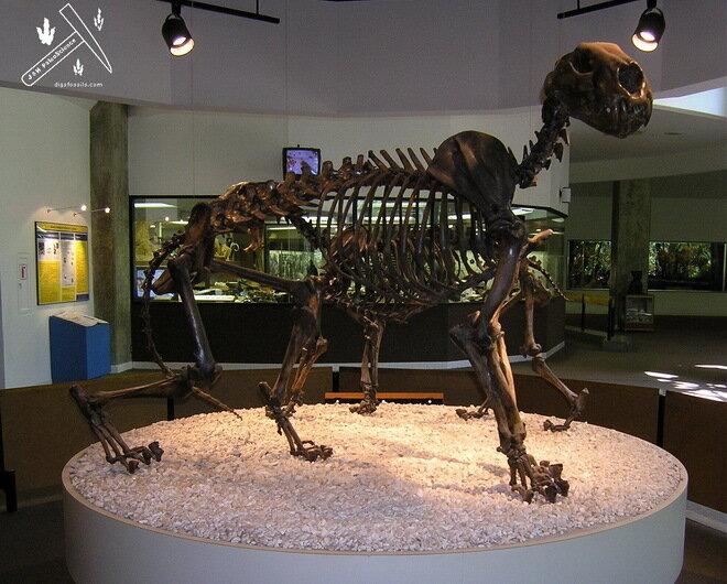 Ранчо Ла-Бреа и Музей Пейджа. Лос-Анджелес, США