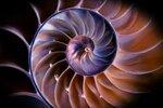 seashell_web.jpg