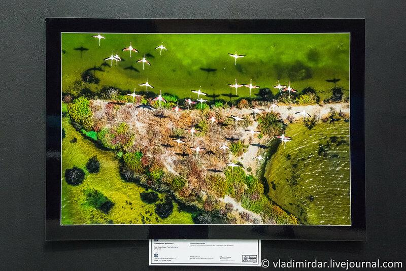 Эскадрилья фламинго. Пере Соле Исерн. Португалия.