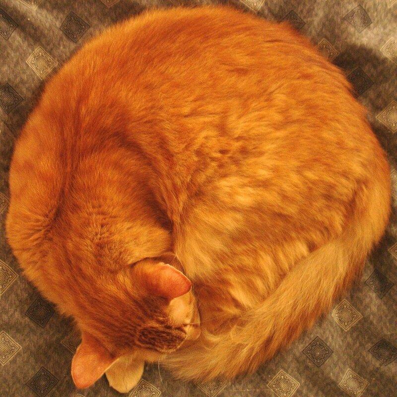 сферический котъ