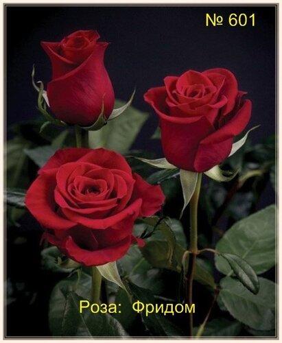 Цветочный магазин ангел цветов ульяновск цветы